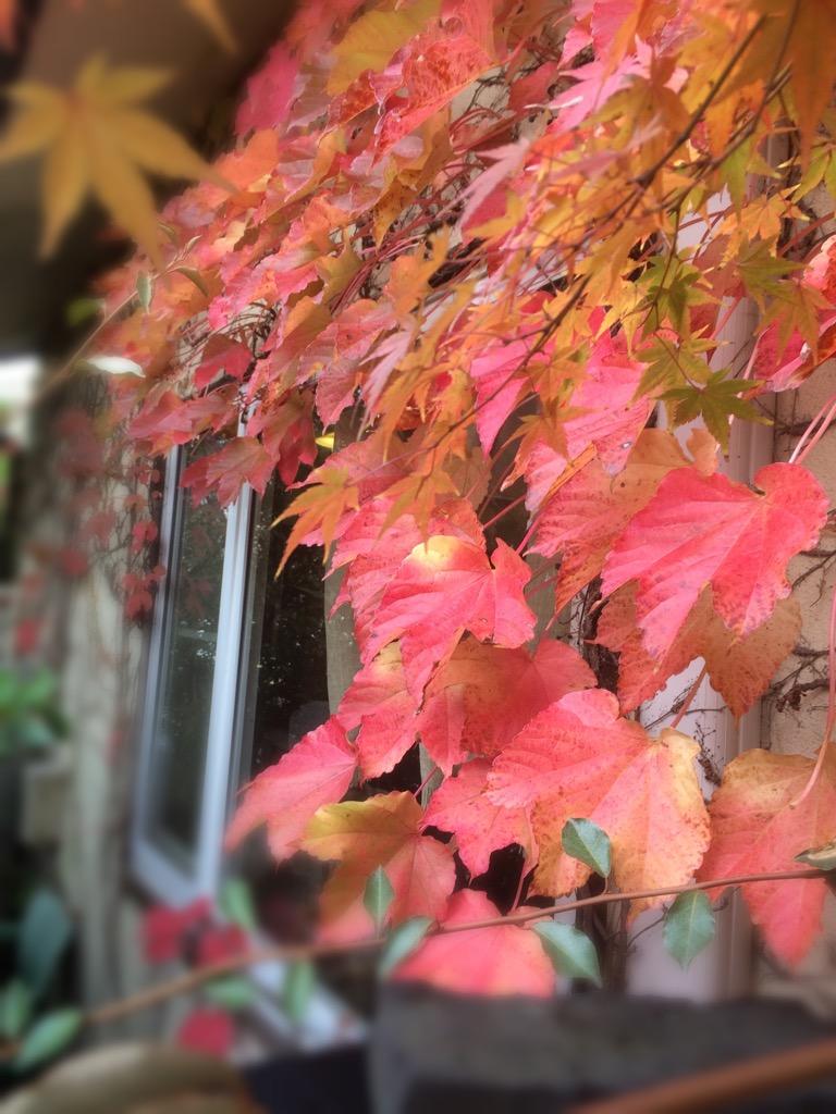 まなびの秋2